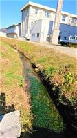 湖南高校の敷地内を流れる小川