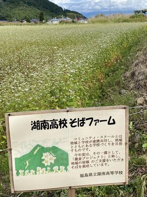 収穫間近の湖南高校蕎麦ファーム